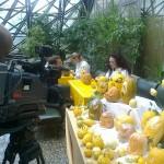 Благотворителна изложба от гравирани плодове и зеленчуци в ИНТЕРПРЕД-СТЦ София, 30-31.10.2012
